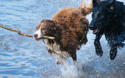 Votre chien saute partout ?