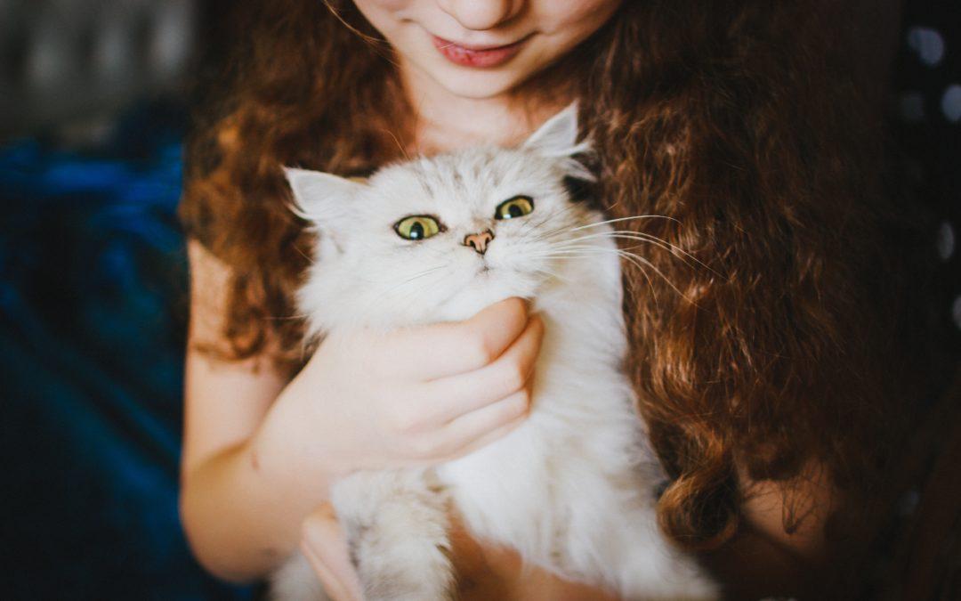 Comment prendre soin de son chat ?