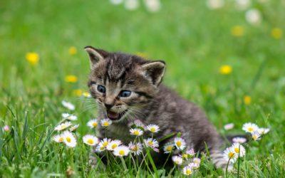 Les dangers du Printemps pour nos chats
