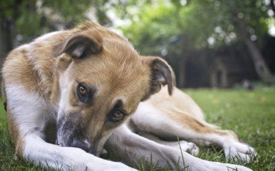 Niche pour chien : Comment la choisir et l'installer ?